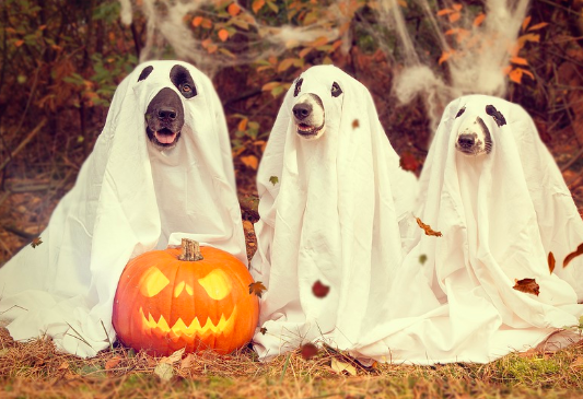 dogs in ghost costumes for halloween with a pumpkin