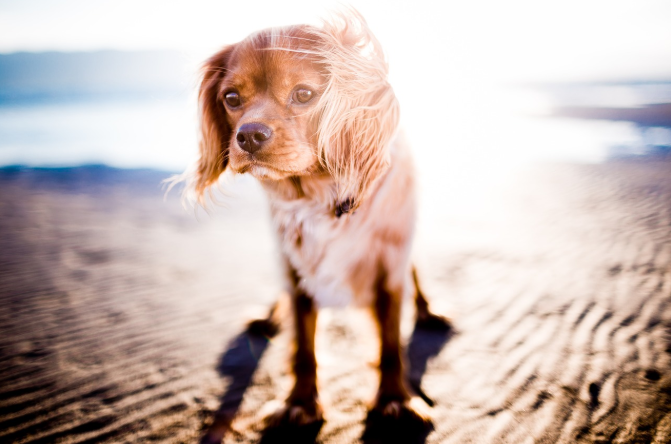 pet dog in the sun