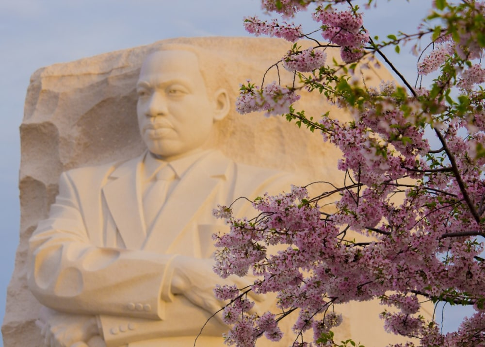 The Martin Luther King memorial in Washington DC with a cherry blossom tree in front