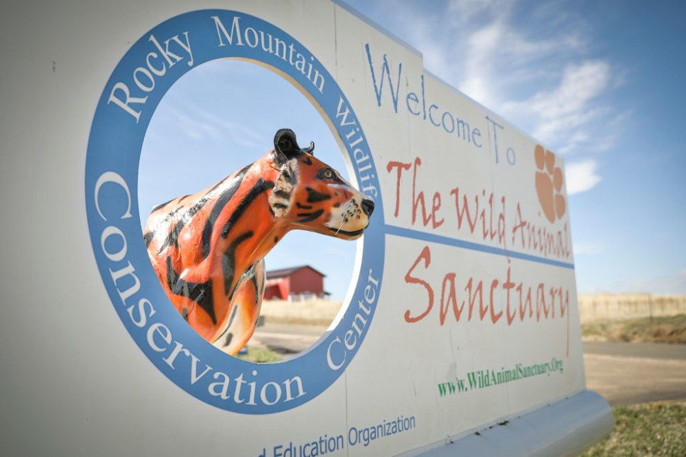 KEENESBURG, CO - APRIL 05: Signage for the Wild Animal Sanctuary where 39 tigers rescued from Joe Exotic's G.W. Exotic Animal Park currently reside on April 5, 2020 in Keenesburg, Colorado. Exotic, star of the wildly successful Netflix docu-series Tiger King, is currently in prison for a murder-for-hire plot and surrendered some of his animals to the Wild Animal Sanctuary. The Sanctuary cares for some 550 animals on two expansive reserves in Colorado. (Photo by Marc Piscotty/Getty Images)