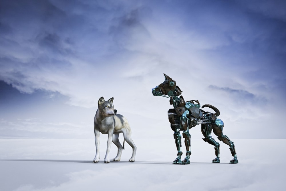 A real dog staring at a robotic dog