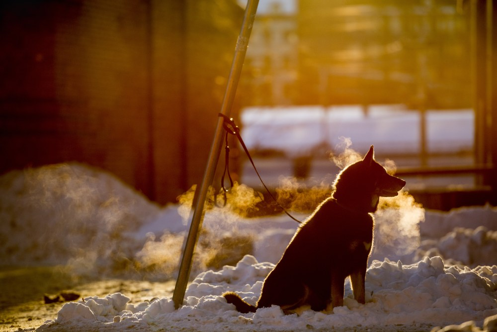 Abandoned dog tied to a pole in a city area during winter
