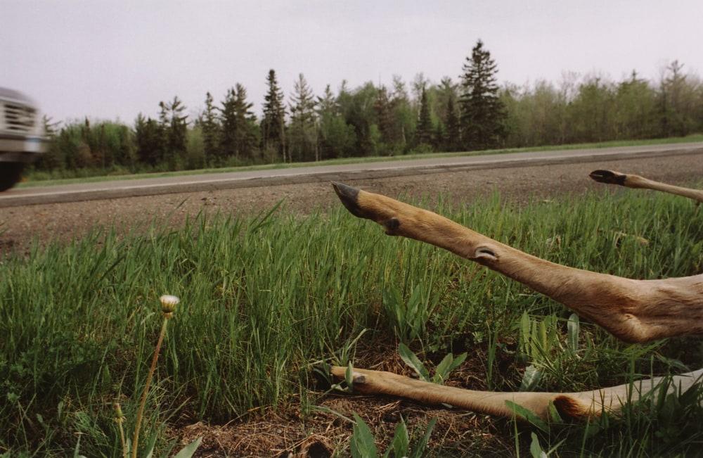legs-of-dead-deer-at-roadside