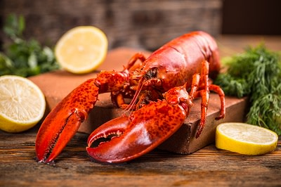 Freshly cooked lobsters served whole for dinner
