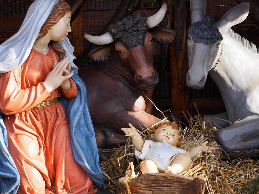 Christmas and manger scene with life size statues of Virgin Mary, Jesus Child, steer, donkey in a plaza.