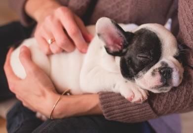 sleeping-puppy-dog
