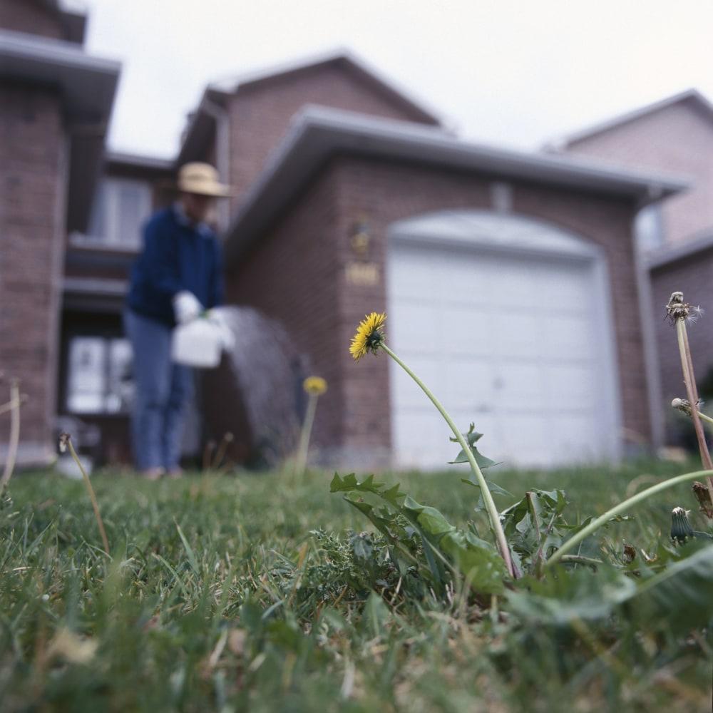 spraying-weeds-front-yard