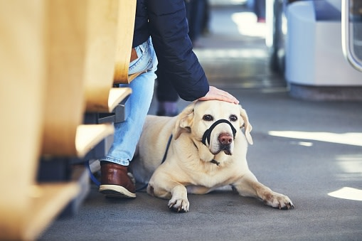Travel with dog by public transportation